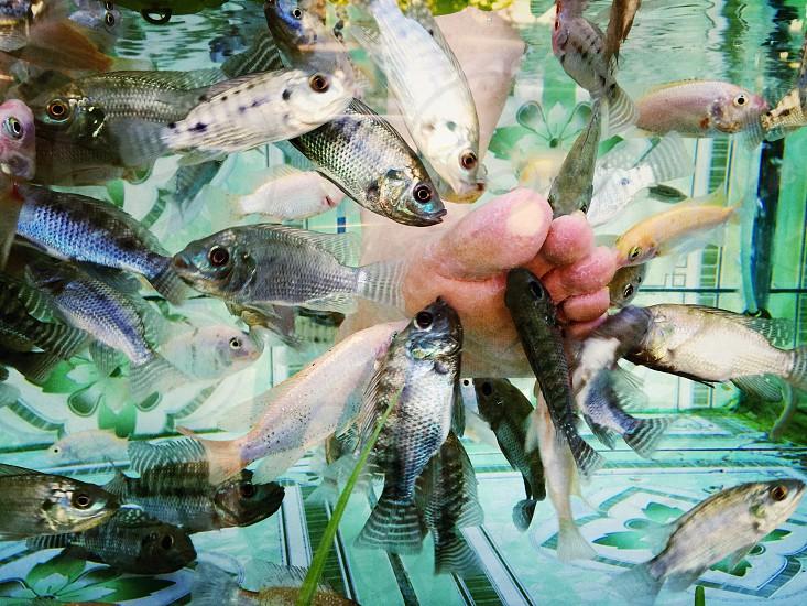 Fish massage...Siem Reap Cambodia  photo