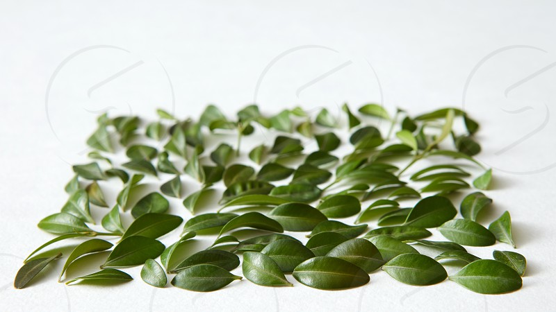Green leaves represented over white background. Nice composition for decorating or designing any poster. Green texture concept. photo