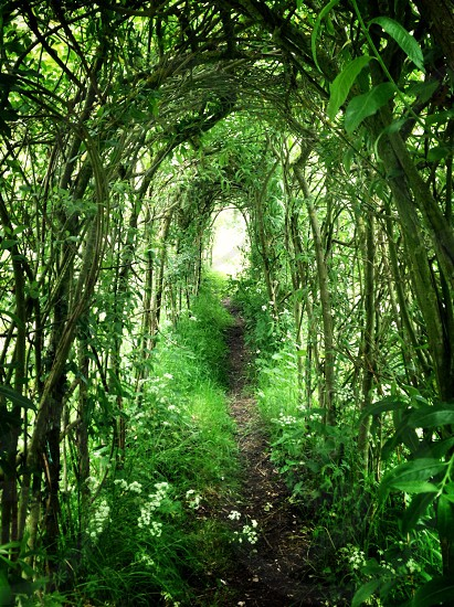 Looking through a nature tunnel photo