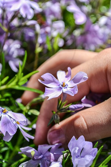 picking flowers photo