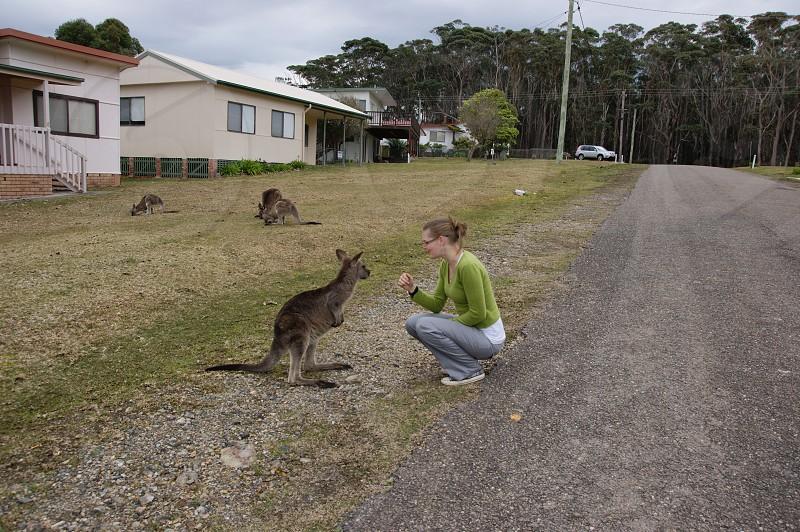 Woman petting a kangaroo in North Durras NSW Australia photo