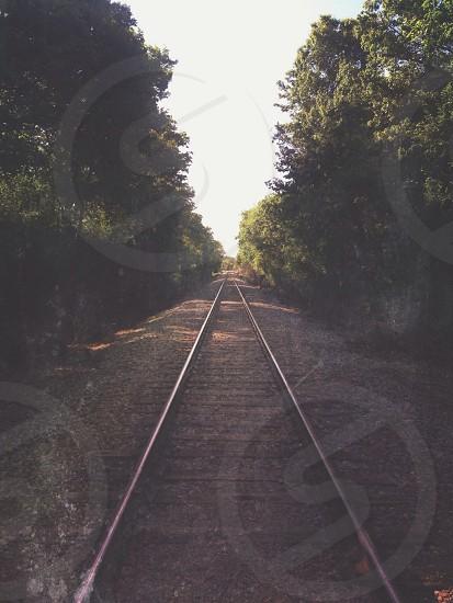 rail tracks through a forest photo