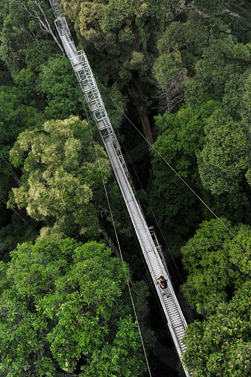 treetops canopy walk Ulu Temburong national  park Brunei forest rainforest Borneo jungle wild birdeye bridge Asia southeast Asian ASEAN destination landmark nature spring summer trekking adventure tourism travel tourist photo