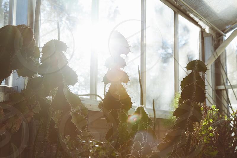 sun rays passing through glass window on green cactus photo