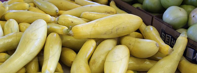 Yellow squash photo
