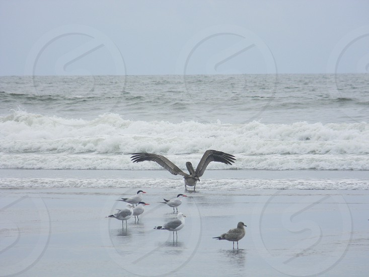 Sea birds by the ocean photo