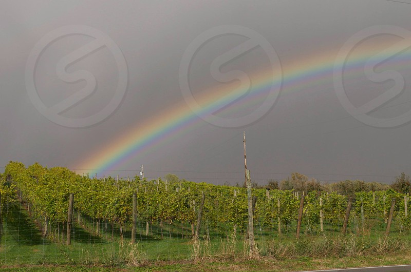 A rainy day at the vineyard  photo