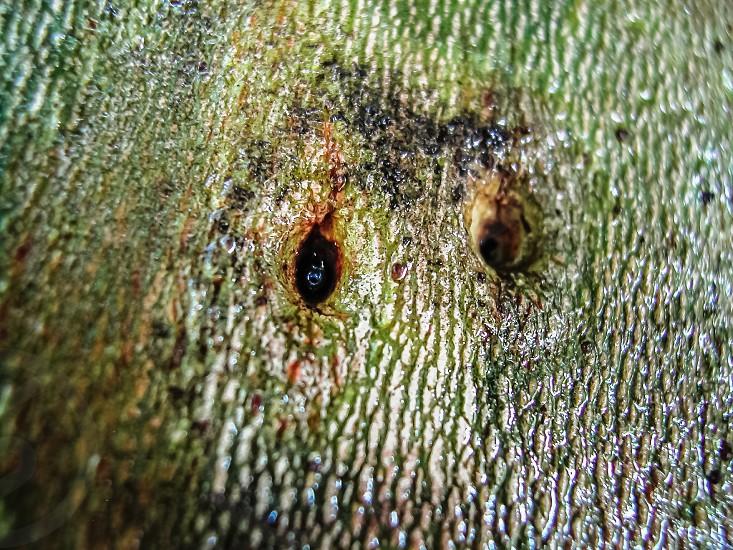 tree bark the shape of owls nature play photo