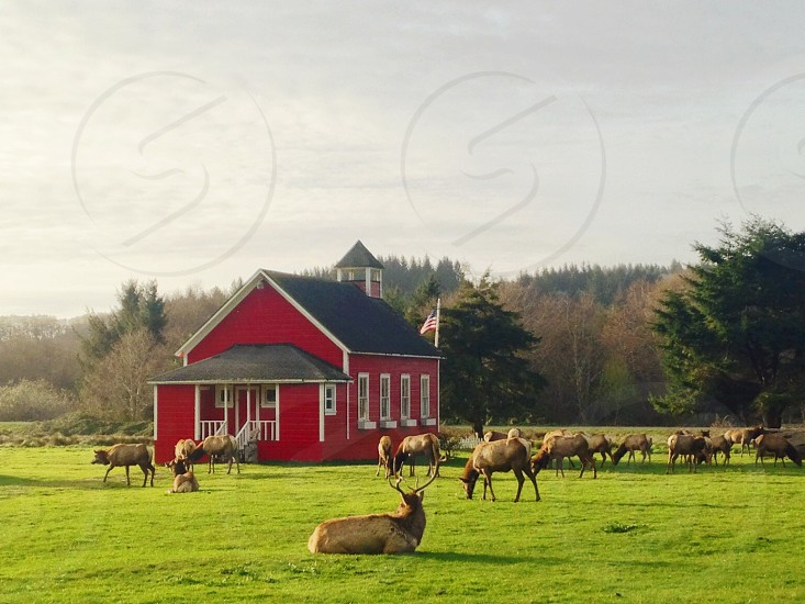 red house with brown deer photo