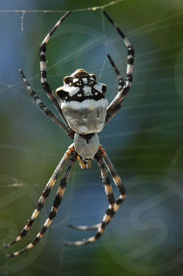 Spider in its web Bahamas photo