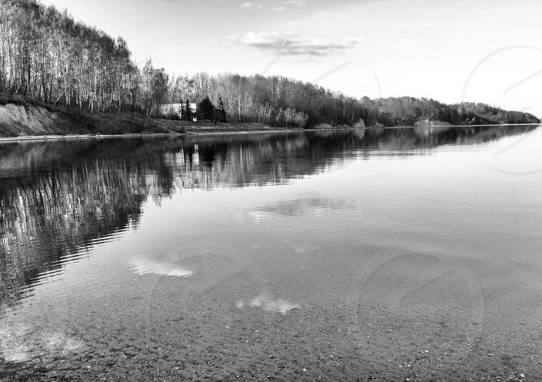 trees near lake grayscale photography  photo