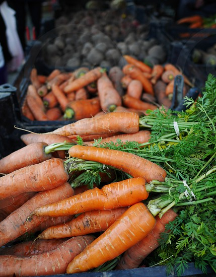 Vegetables veggies vegetable carrot carrots roots root stall food food market  ecological  health healthy eatable photo