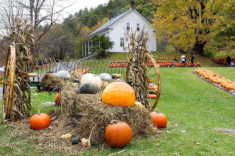 Pumpkin patch fall autumn Vermont green mountains hay farm  wheel photo