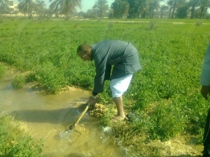 Farming in Aswan Egypt. photo