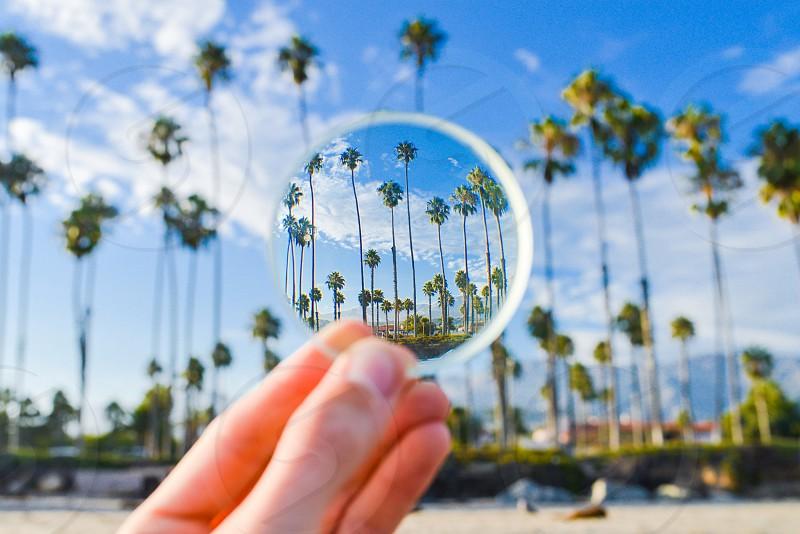 palm trees view pov lens world photo