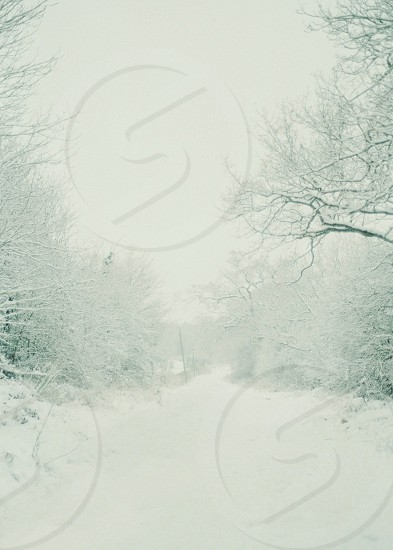 snow pathway winter christmas white dream trees forest photo