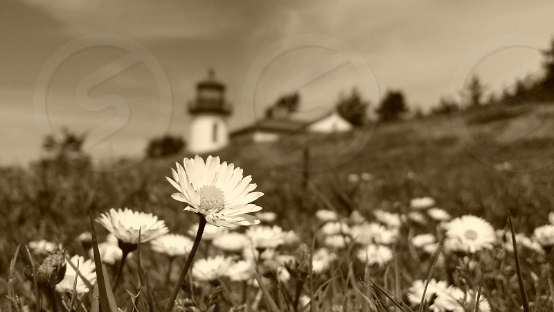 Fort Casey Light House Wa photo