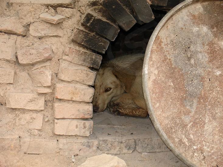 Dog Abandoned Animal Poor Animals Neglected Animal Pets  photo