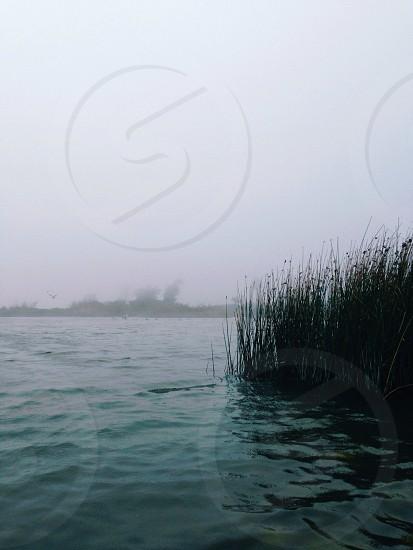 green leaf grass near blue water form photo
