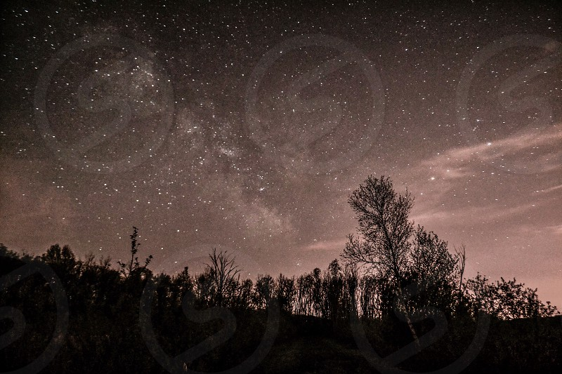Trees against starry sky  photo