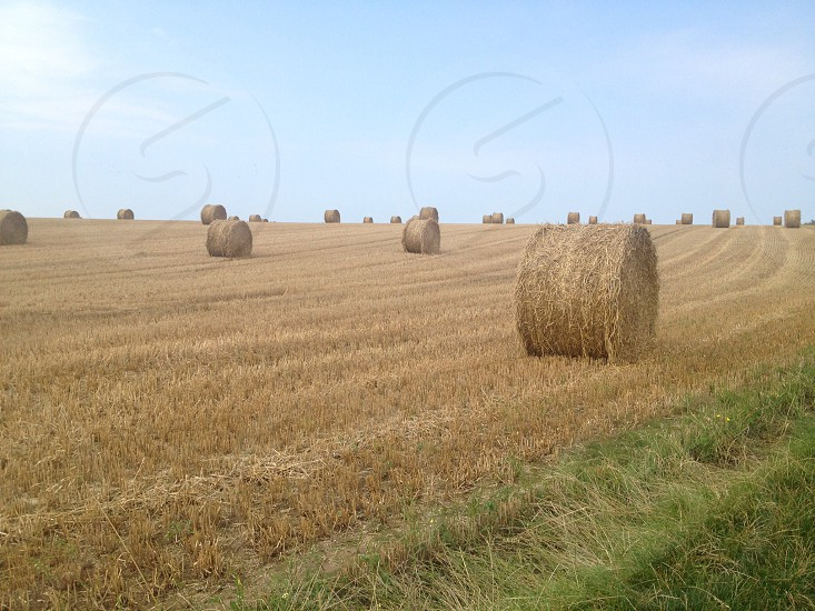 Hay stacks / rolls in Brittany France photo