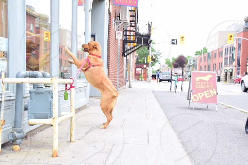 streets of ottawa photo