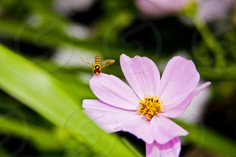Just Bee photo