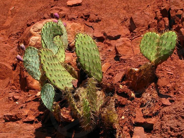 photo of cactus plants photo