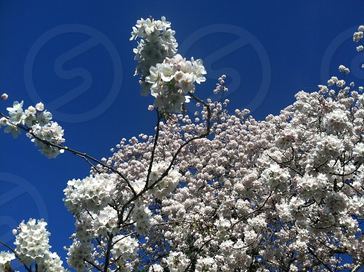 white floral blossom photo