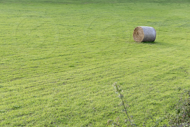 straw bale in green meadow photo