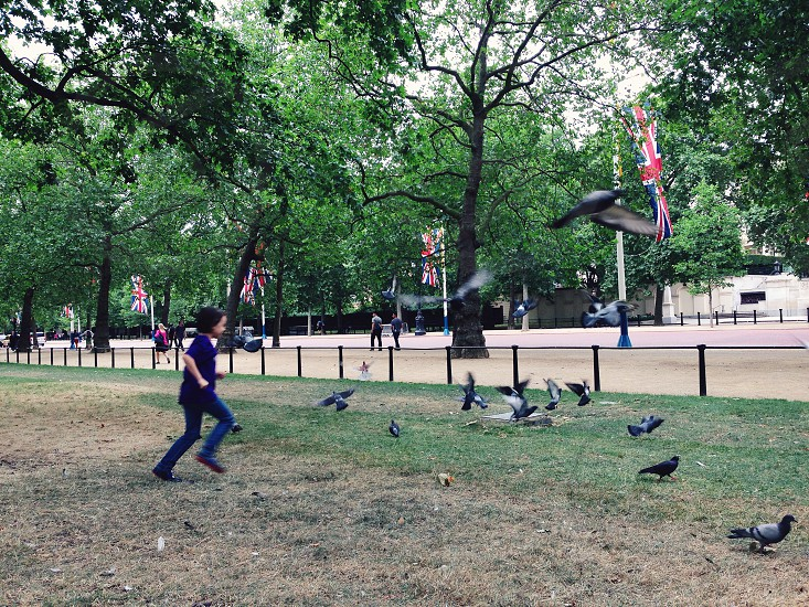 child in blue denim jeans chasing pigeons photo