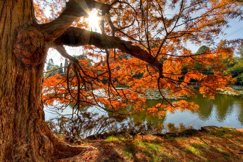 A tree in autumn/fall next to a lake with awesome autumn colours and the sun shining through the leaves. photo