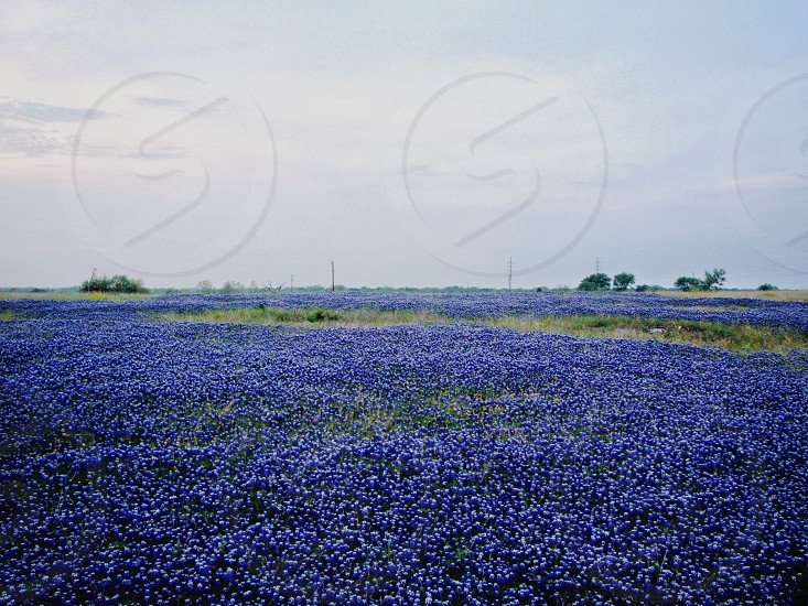 Texas in the spring brings great wild flowers! photo