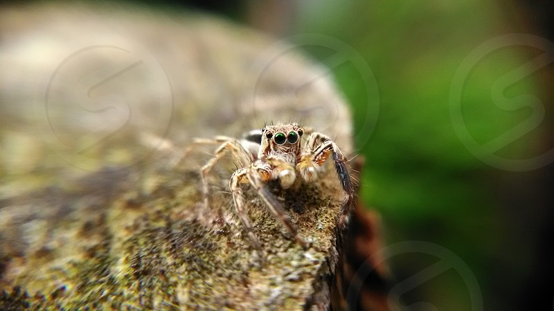 spider on brown surface photo