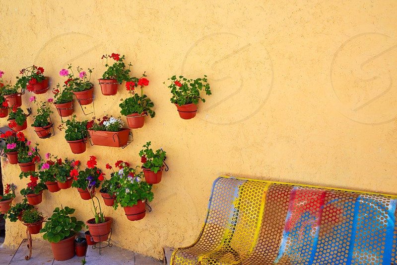 Burgos colorful facade with plants pots and flowers in Castilla Spain photo