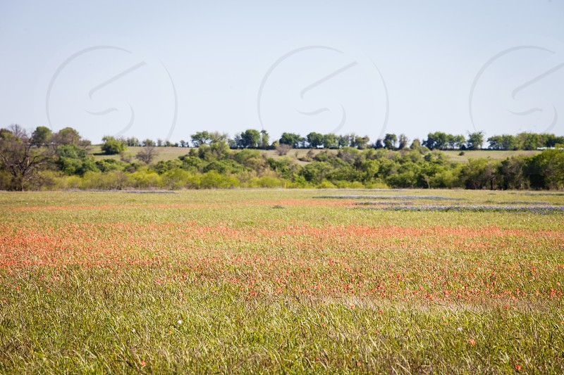 Orange flowers in a pasture on the farm. photo