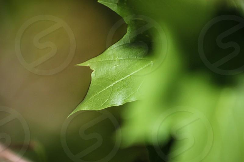 #leaf #nature #maryland photo