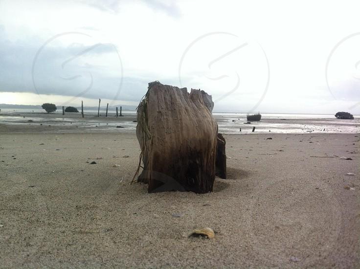 Clarks beach Auckland New Zealand  photo