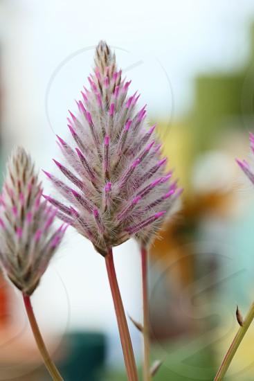 Macro macro photography macro flower pink photo