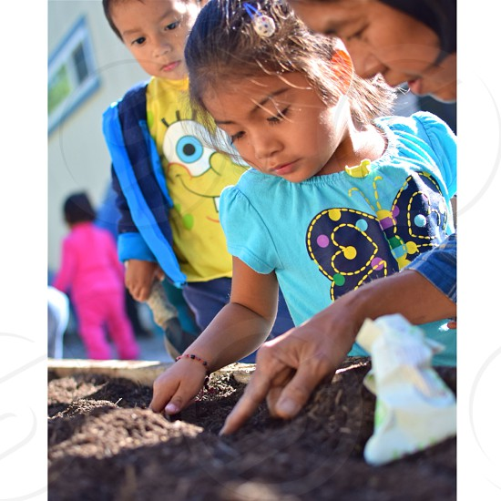 girl in blue blouse holding brown soil photo