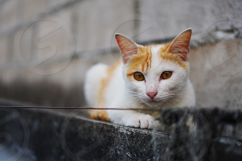 A stray cat on a deserted wall photo