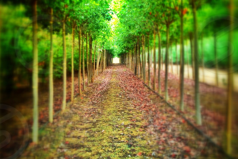 Vanishing point in the trees photo