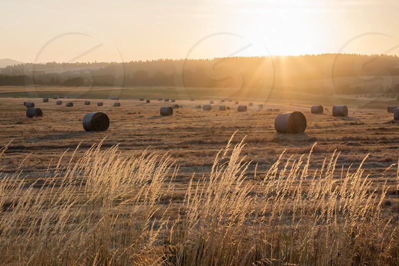 Field hay sun warm sunrise photo