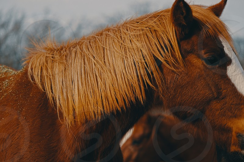 Moody farm image shows texture of horse mane. photo