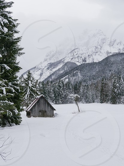 Cabin in the snow. photo