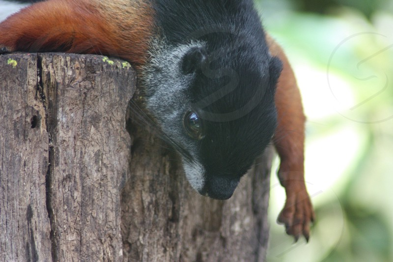 black and brown animal on tree trunk photo