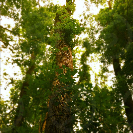 green tall tree in low angle photo photo