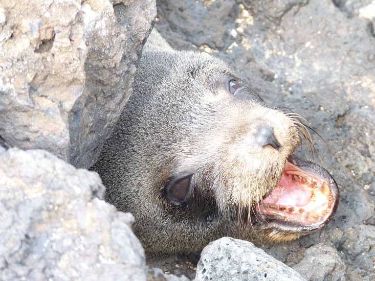 gray sea lion animal photography photo