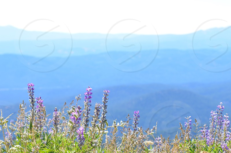 Nature grass hills valley mountains skyline blue wild flowers fwide open spaces overlook photo