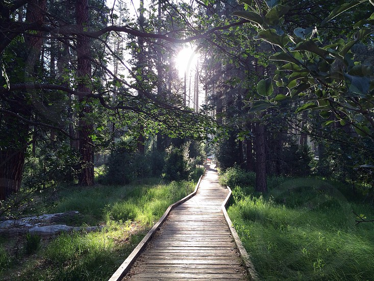 gray wooden walkway in between green grass and trees photo